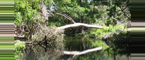 Costa Rica Reserva Biológica Lomas Barbudal