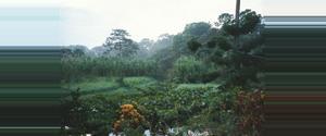 Costa Rica Reserva Aviarios del Caribe