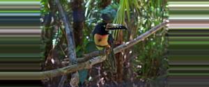 Belize Zoológico de Belice