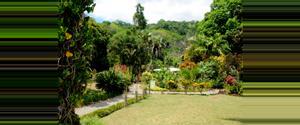 Costa Rica Casa de Orquídeas
