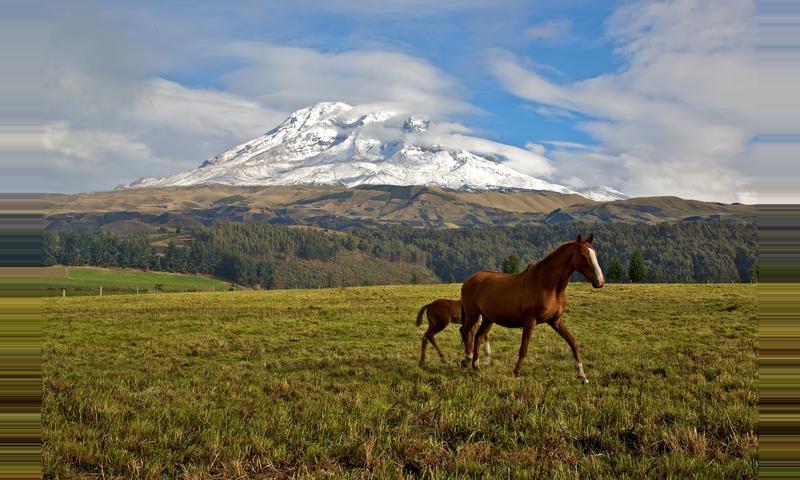 Chimborazo Ecological Reserve