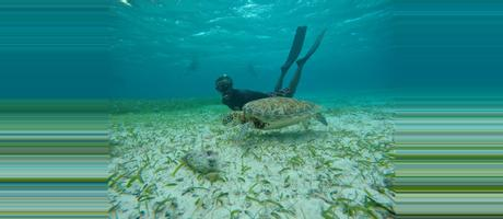 Belize Hol Chan