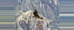 Peru Mirador del Condor
