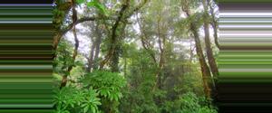 Costa Rica Reserva Biológica Bosque Nuboso Monteverde