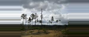 Belize Reserva Forestal Montaña Pine Ridge