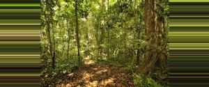 Panama Parque Nacional Darién
