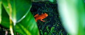 Panama Red Frog Beach