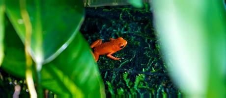 Panama Red Frog Beach