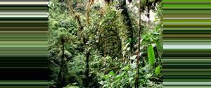 Costa Rica Reserva del Bosque Nuboso Santa Elena