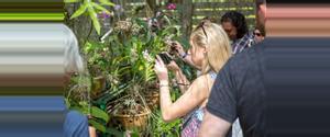 Cuba Soroa Orchid Garden