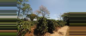 Costa Rica Naranjo