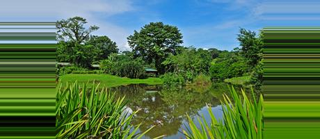 Costa Rica Horquetas de Sarapiqui