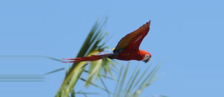 Costa Rica Puerto Jiménez Costa Rica