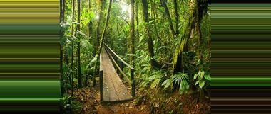 Costa Rica Rara Avis Rainforest Lodge and Reserve