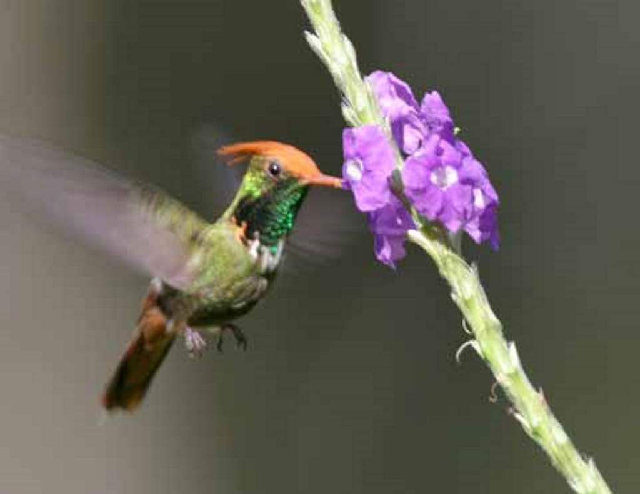 Observación de aves en la Laguna de Huacarpay