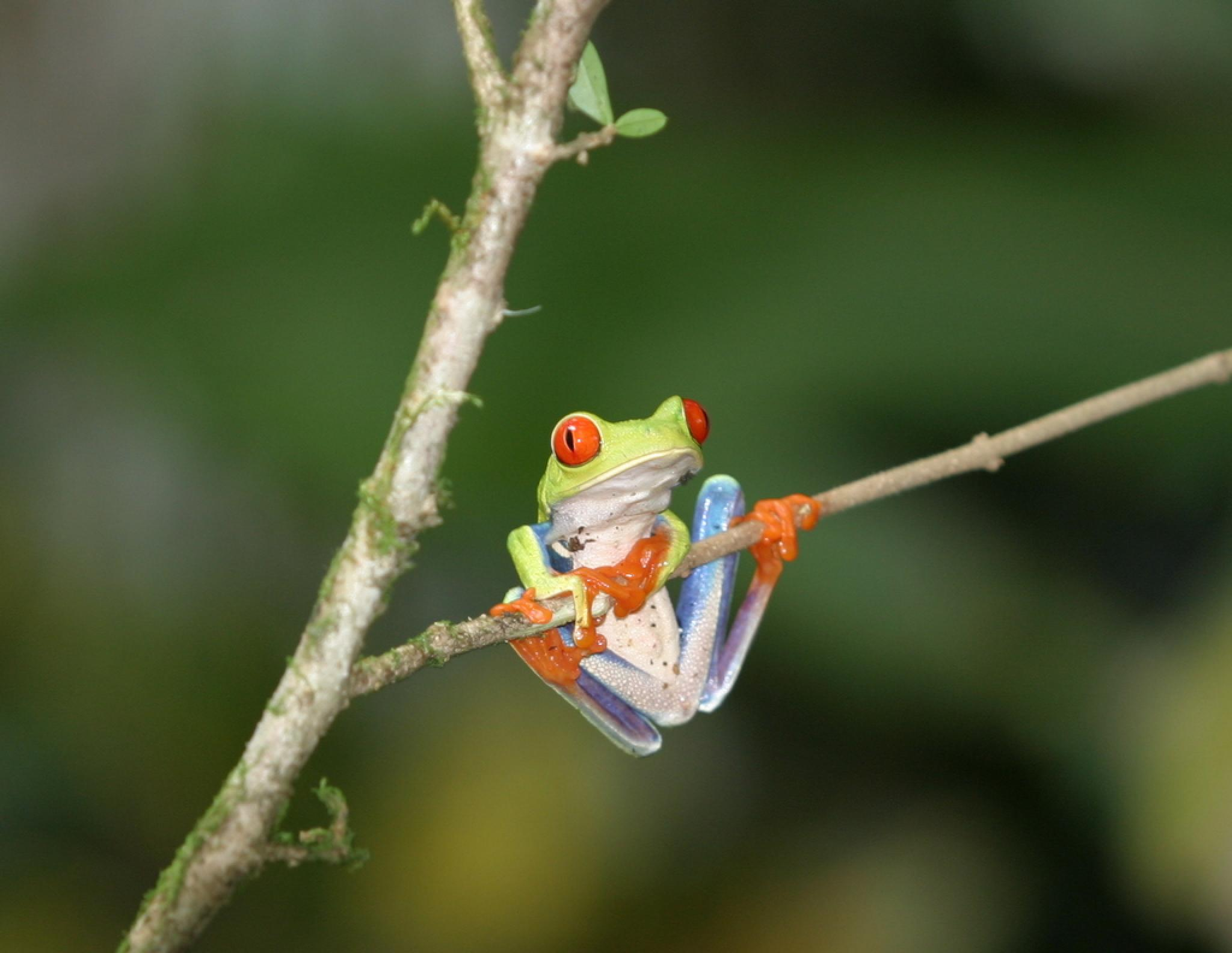 A day with Nature: Suspension Bridges, Butterfly Garden, Amphibian & Snake Exhibits, Lunch