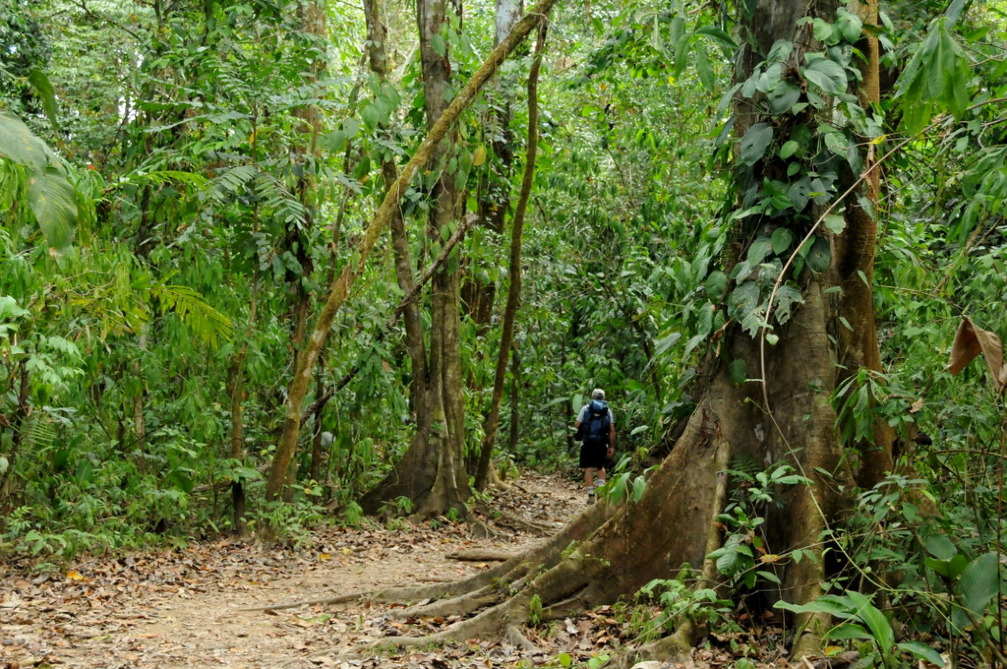 Corcovado National Park Day Tour