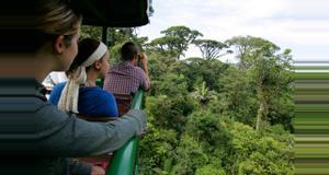 Costa Rica Rain Forest Trekking Tour