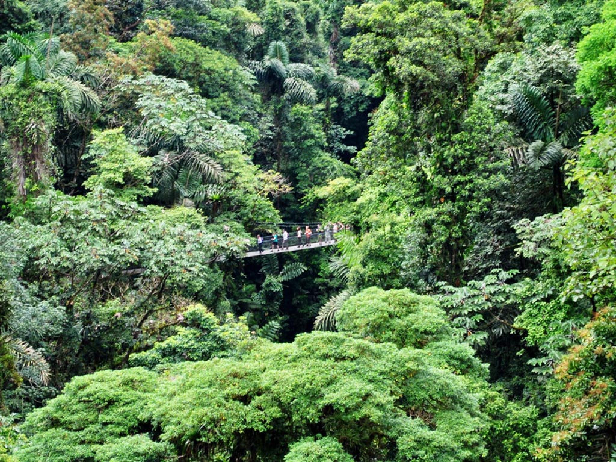 Arenal 4 in 1 Hanging Bridges & Baldi Hot Springs