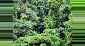 Costa Rica Arenal 4 in 1 Hanging Bridges & Baldi Hot Springs