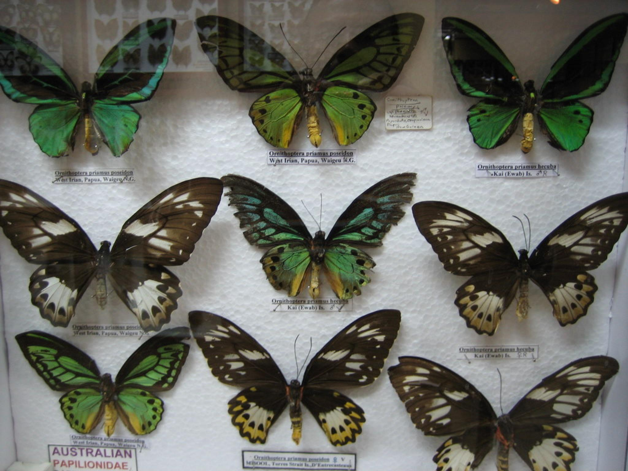 Selvatura Insect Museum