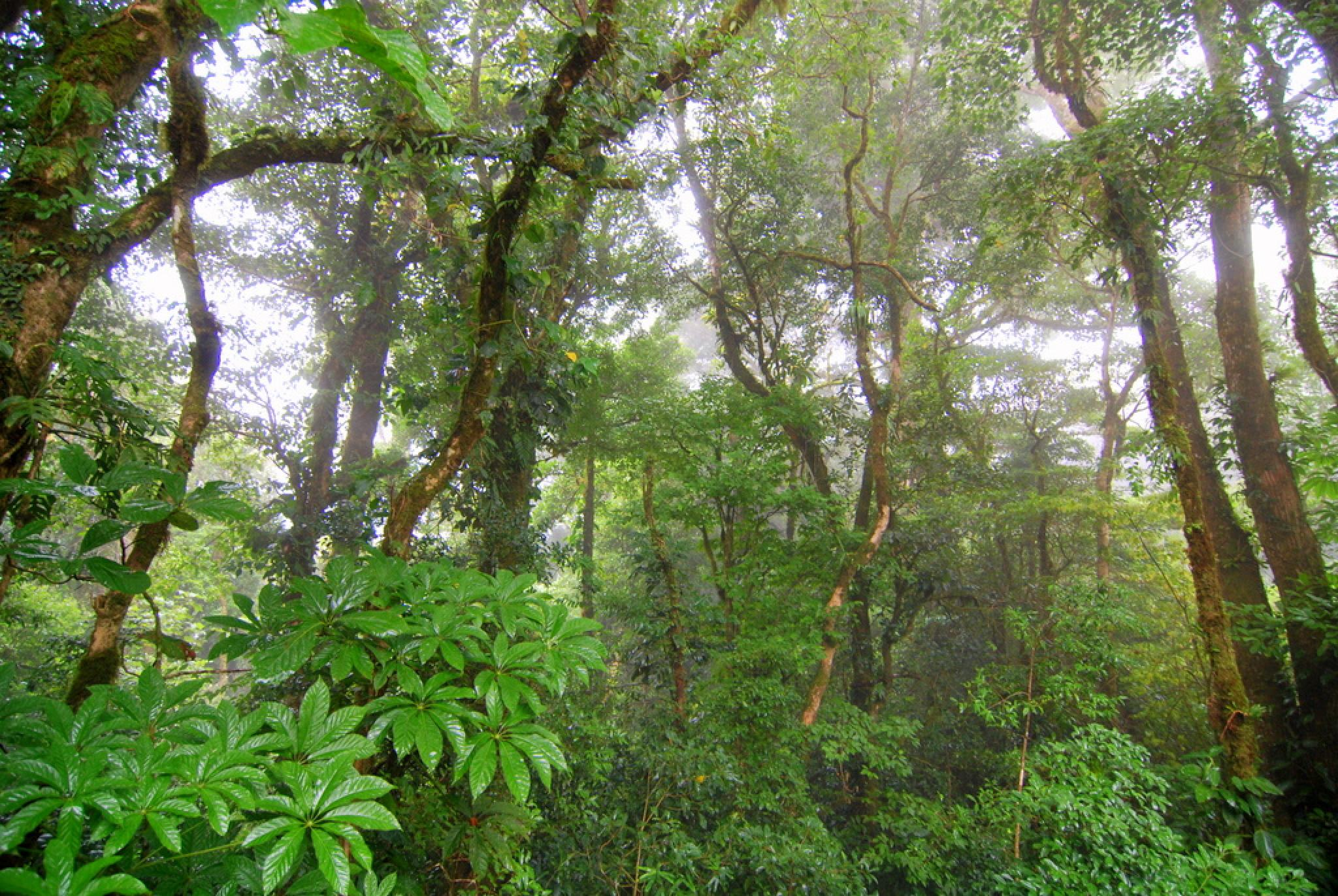 Guided Tour Monteverde Cloud Forest Reserve