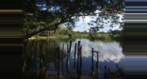 Guatemala Estación Biológica Las Guacamayas