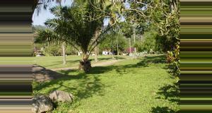 Guatemala Admirando el Saltarín Toledo en Los Tarrales