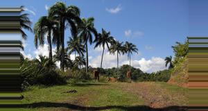 Cuba Visit to Alejandro de Humboldt Park