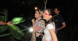 Costa Rica Amphibious Reptiles at Night