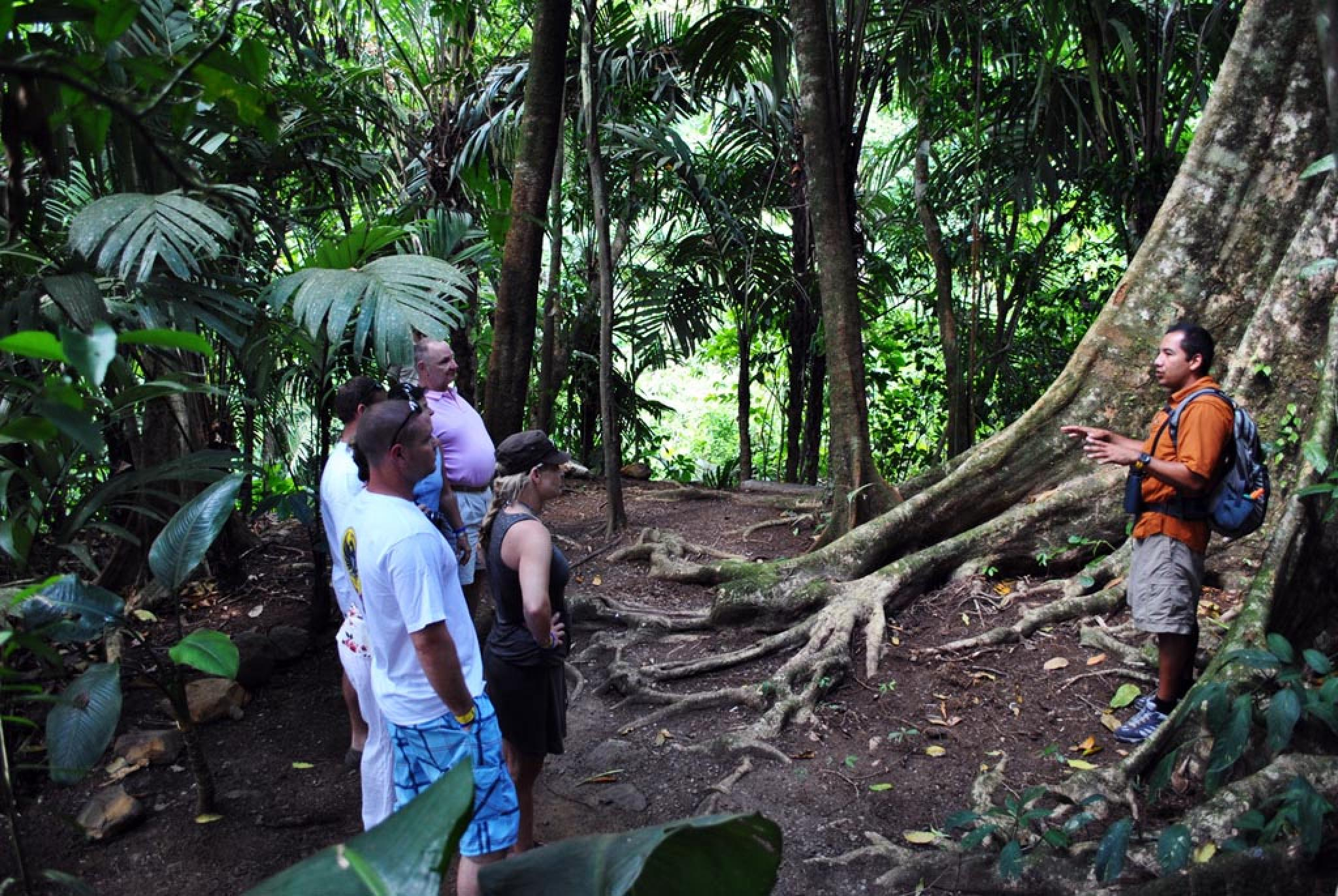 Arenal Volcano Walk & Tabacon Hot Springs