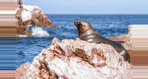 Peru Excursión en barco por las Islas Ballestas