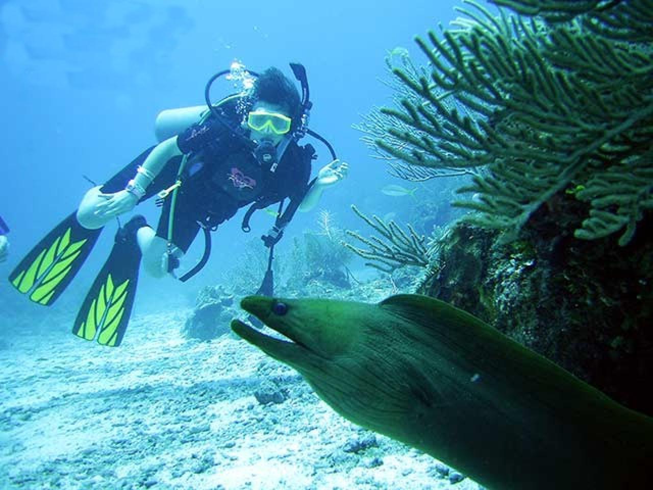 Barrier Reef Scuba Diving Belize