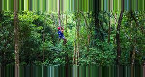 Panama Bastimentos Sky Zip-Line Canopy Tour
