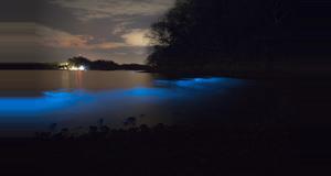 Costa Rica Tour de Bioluminiscencia en Kayak