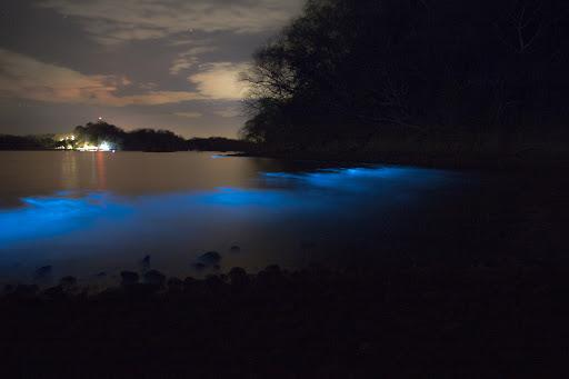 Bioluminescent Kayak Tour