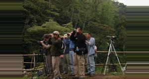 Guatemala Observación de Aves en Antigua