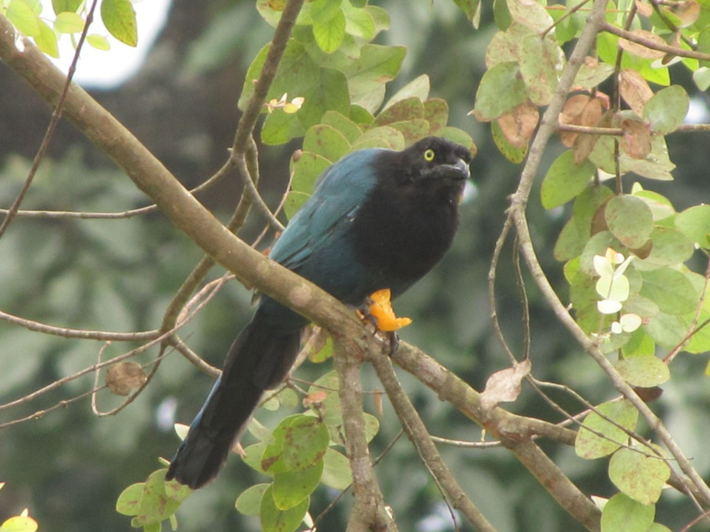Observación de aves en Finca Filadelfia