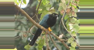 Guatemala Birdwatching Filadelfia