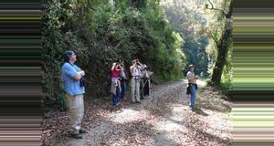 Guatemala Avistamiento de aves y paseos por los bosques de montaña