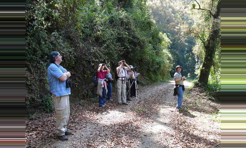 Birdwatching & Mountain Forest Walking