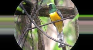 Costa Rica Birdwatching and Rainforest Wildlife Tour