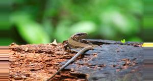 Costa Rica Caminata por el Parque Nacional Cabo Blanco