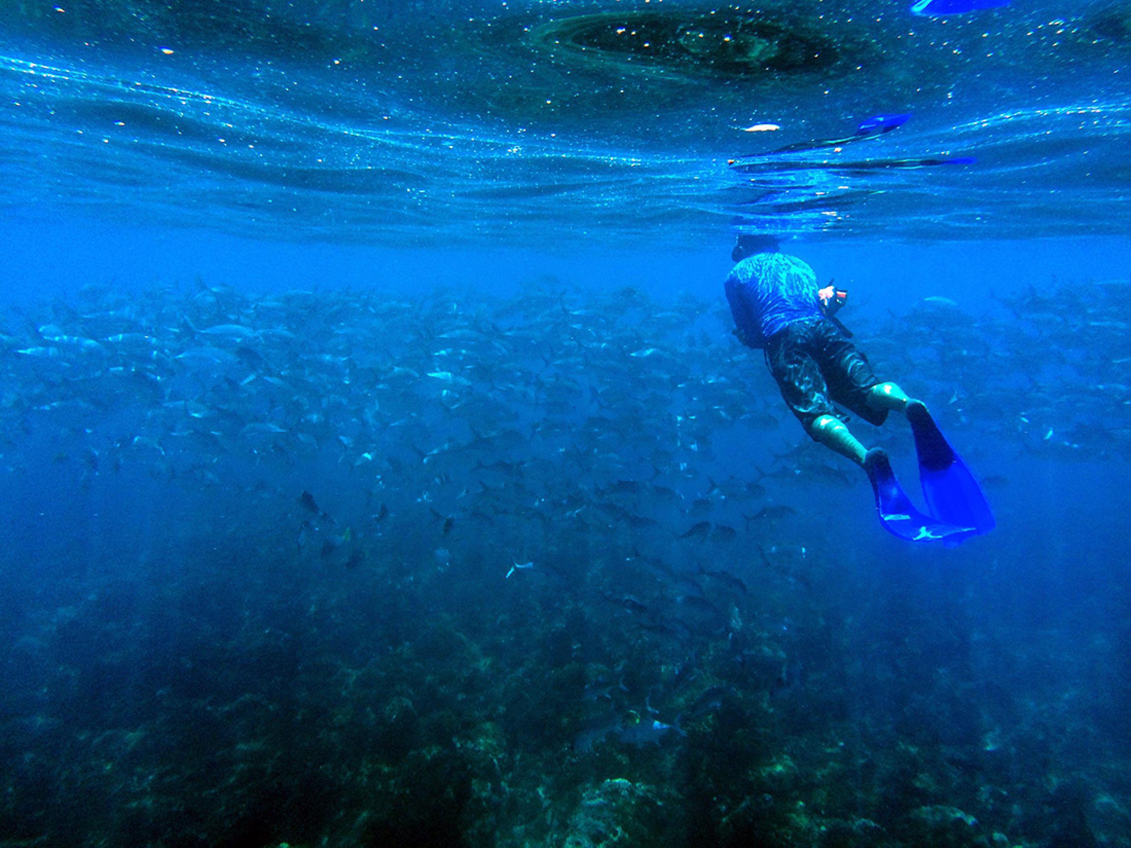 Caño Island Scuba Diving Tour