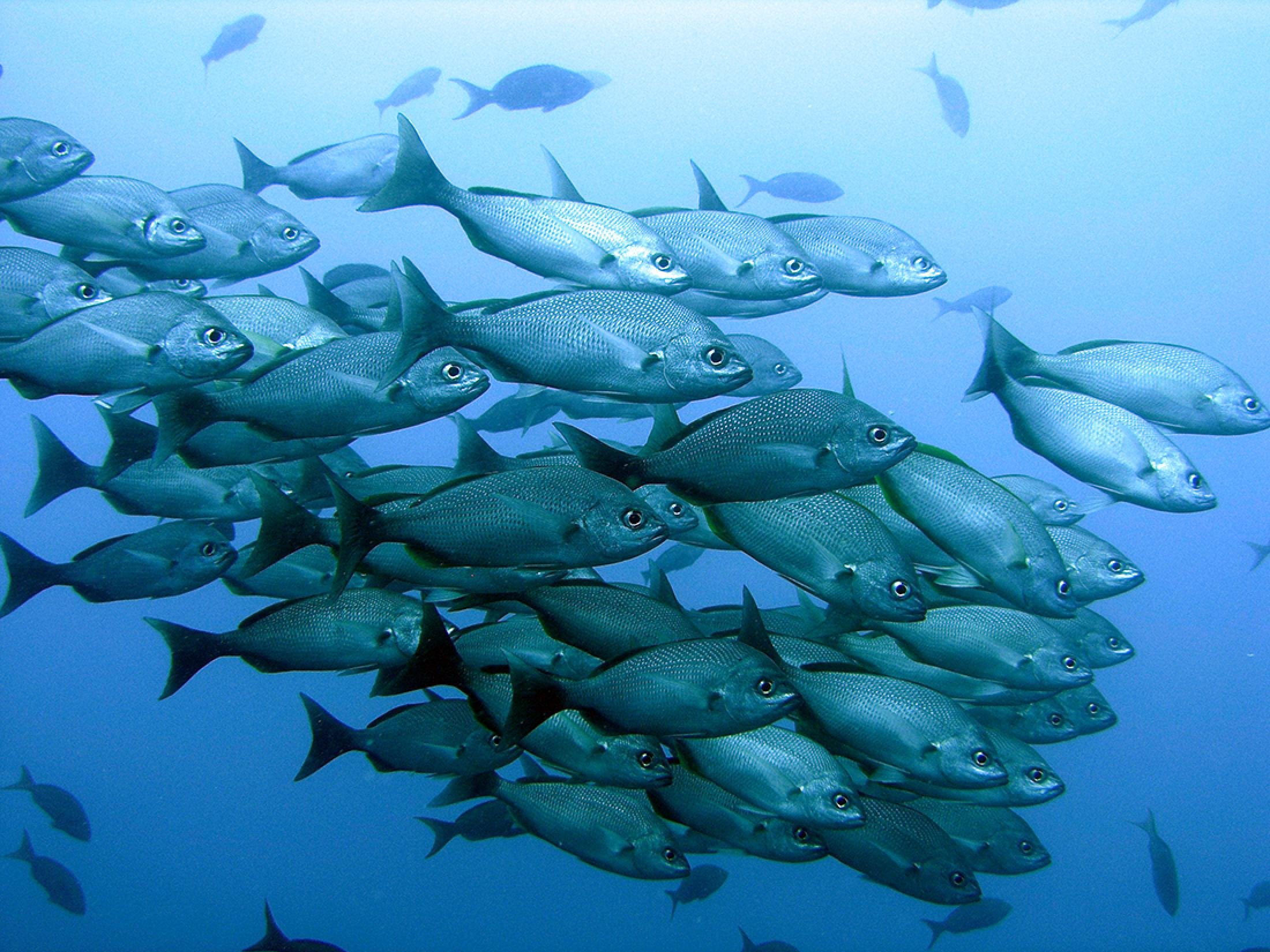Caño Island Two-Dive Tour