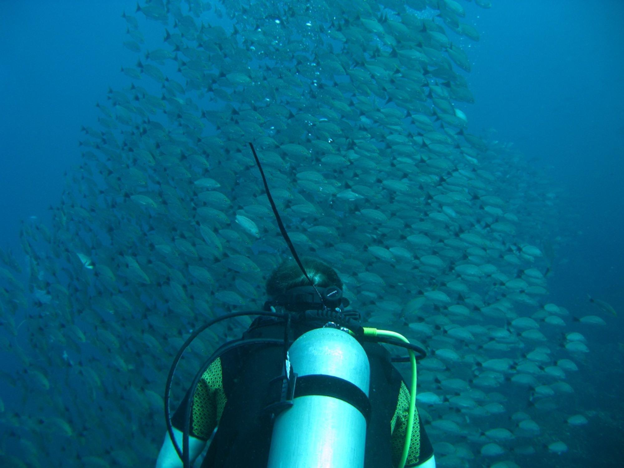 Catalina Islands Scuba Diving