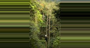 Guatemala Desafiante tour de canopy