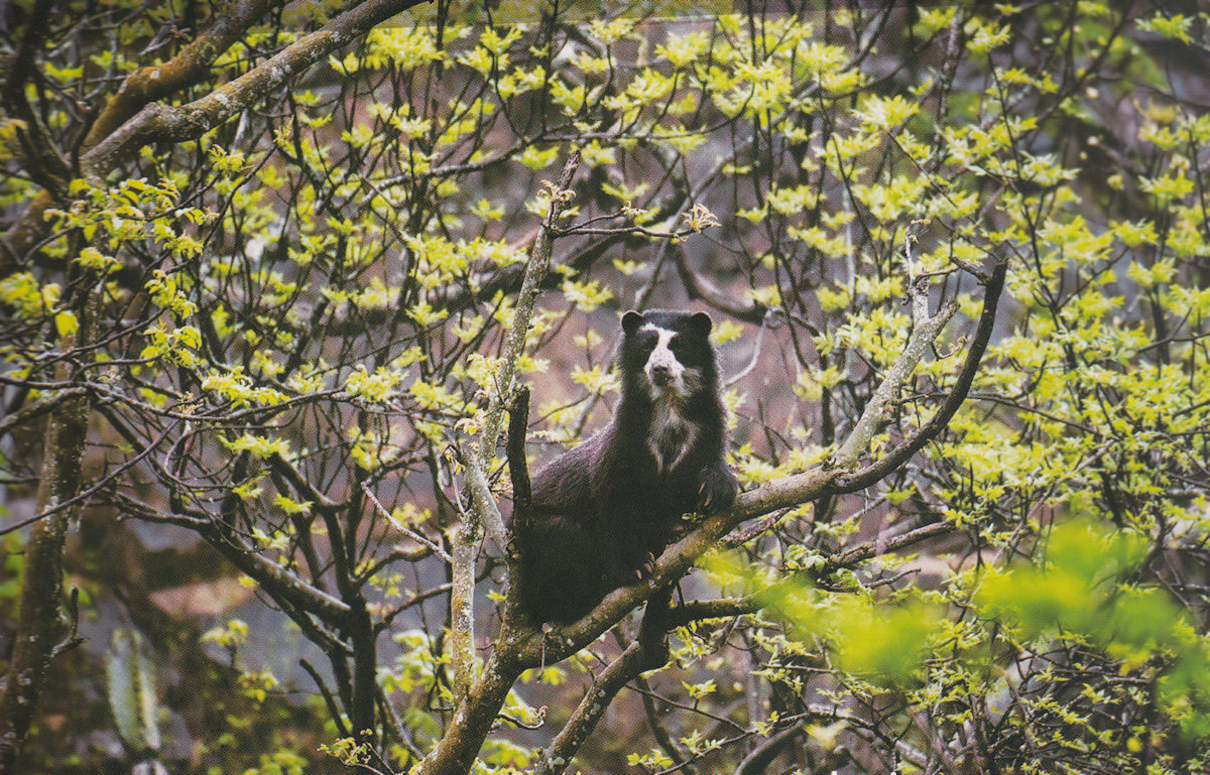 Chaparri Nature Reserve Full Day Tour