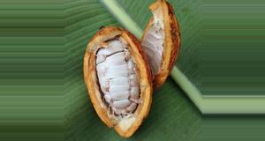 Belize Chocolate Tour (MH)
