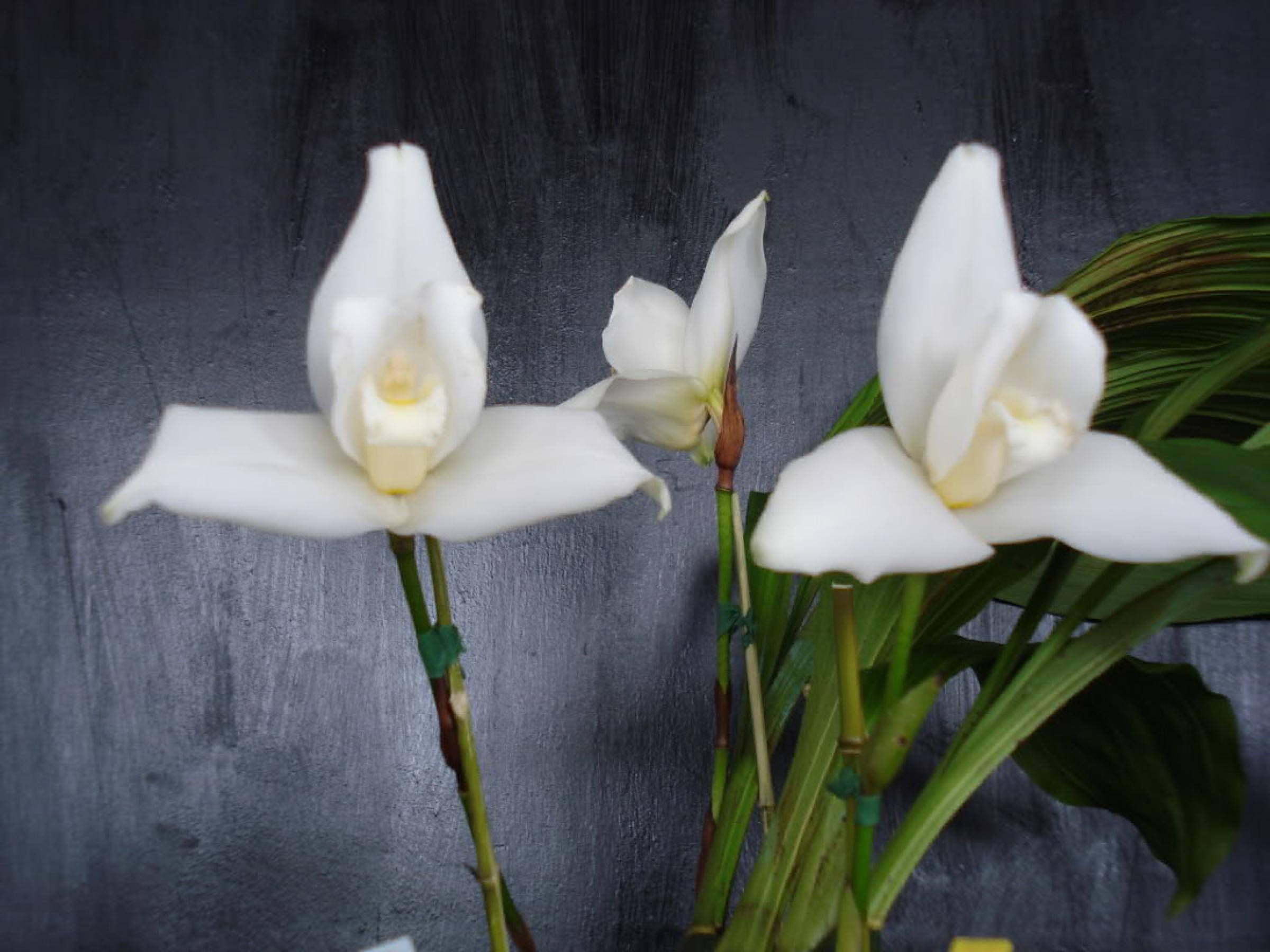 Coban Orchid Tour